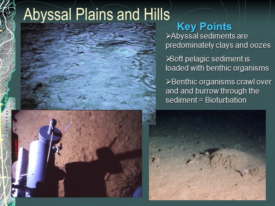 Abyssal Plains and Hills  Abyssal sediments are predominately clays and oozes  Soft pelagic sediment is loaded with benthic organisms  Benthic organisms crawl over and and burrow through the sediment = Bioturbation Key Points