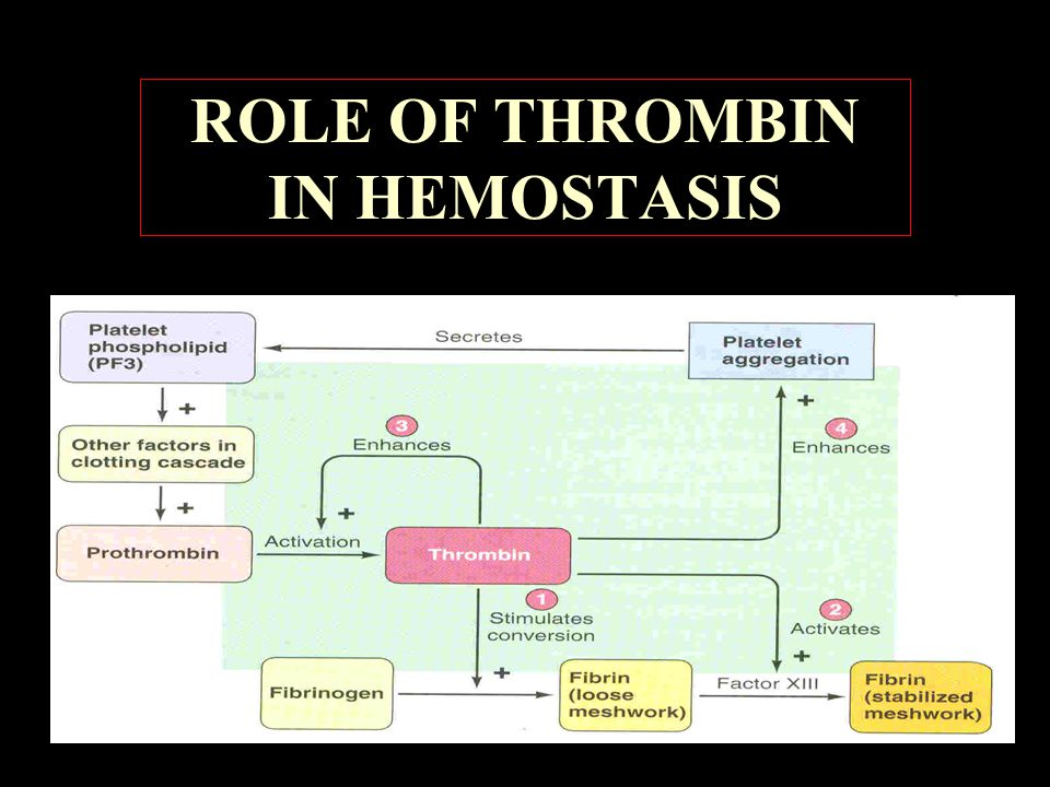 ROLE OF THROMBIN IN HEMOSTASIS