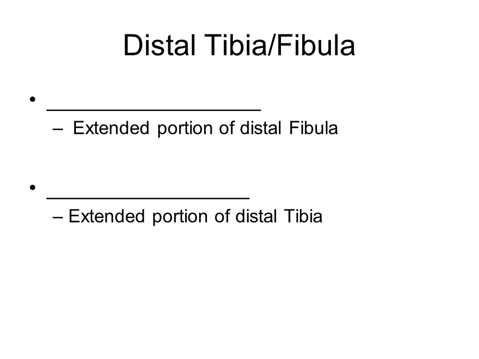 Distal Tibia/Fibula __________________ – Extended portion of distal Fibula _________________ – Extended portion of distal Tibia