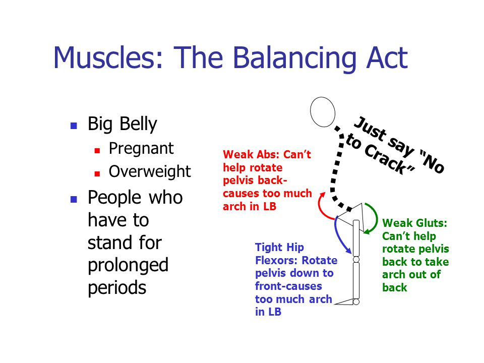 Muscles: The Balancing Act Big Belly Pregnant Overweight People who have to stand for prolonged periods Tight Hip Flexors: Rotate pelvis down to front-causes too much arch in LB Weak Gluts: Can't help rotate pelvis back to take arch out of back Weak Abs: Can't help rotate pelvis back- causes too much arch in LB Just say No to Crack