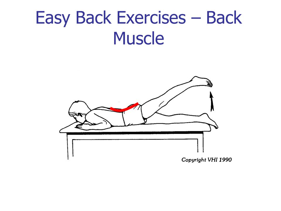 Easy Back Exercises – Back Muscle