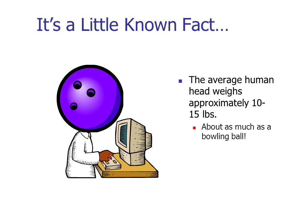 It's a Little Known Fact… The average human head weighs approximately 10- 15 lbs. About as much as a bowling ball!