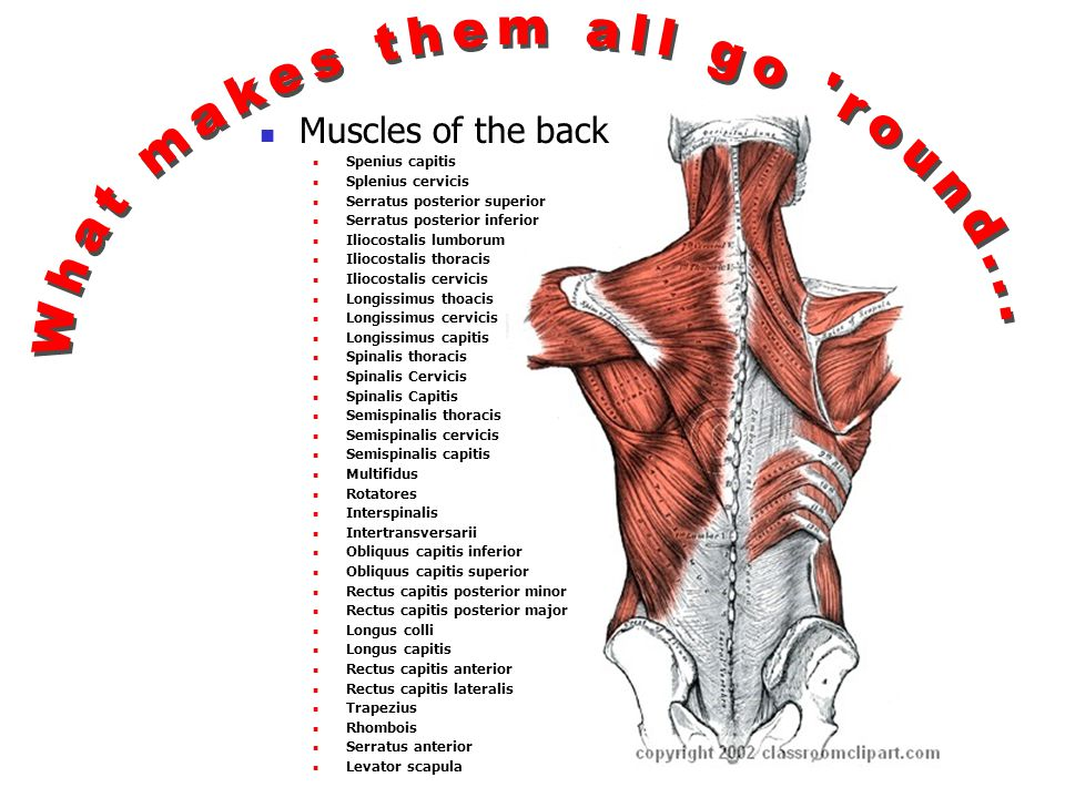 The more there is to mess up the more likely something will mess up. 33 vertebra + 23 discs + 48 joints (24 pair) + 64 muscles (32 pair) + 54 nerves (27 pair) 222 different things to break.