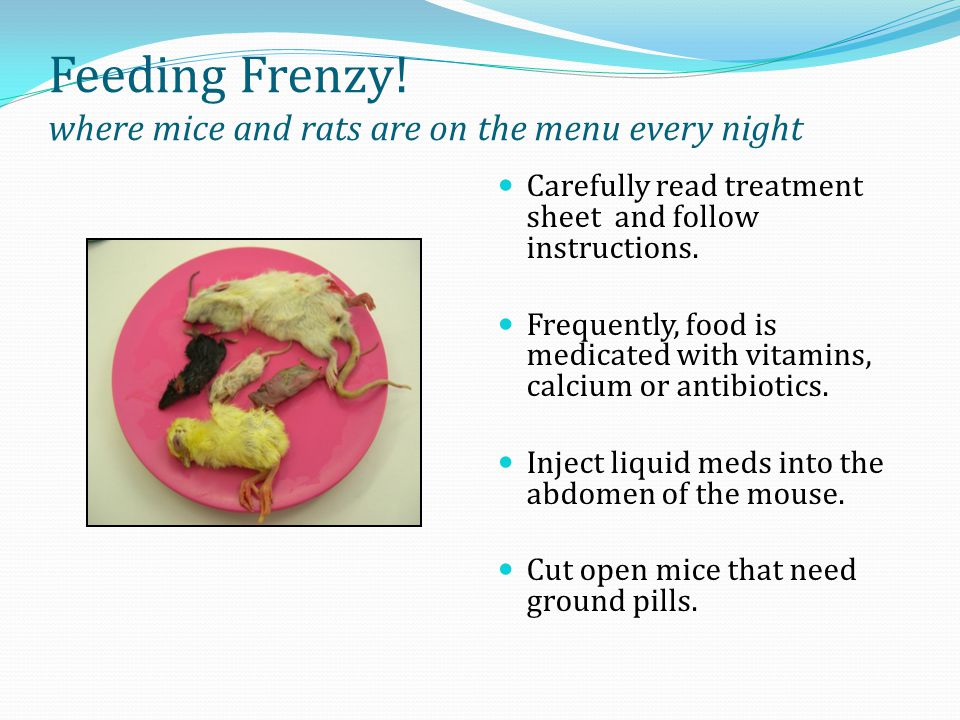 Feeding Frenzy! where mice and rats are on the menu every night Carefully read treatment sheet and follow instructions. Frequently, food is medicated
