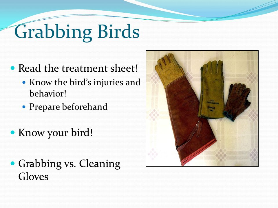 Grabbing Birds Read the treatment sheet. Know the bird's injuries and behavior.