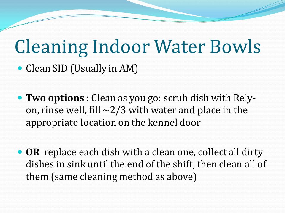 Cleaning Indoor Water Bowls Clean SID (Usually in AM) Two options : Clean as you go: scrub dish with Rely- on, rinse well, fill ~2/3 with water and place in the appropriate location on the kennel door OR replace each dish with a clean one, collect all dirty dishes in sink until the end of the shift, then clean all of them (same cleaning method as above)