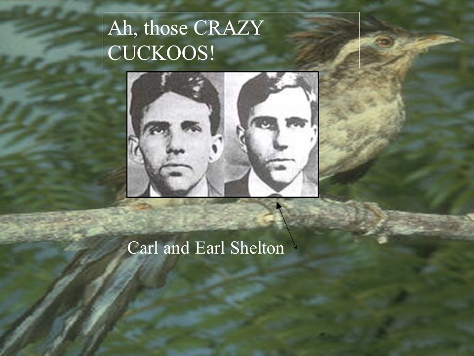 The Cuckoo Gang. The Cuckoos were headed by the three Tipton brothers, Herman, Ray and Roy.