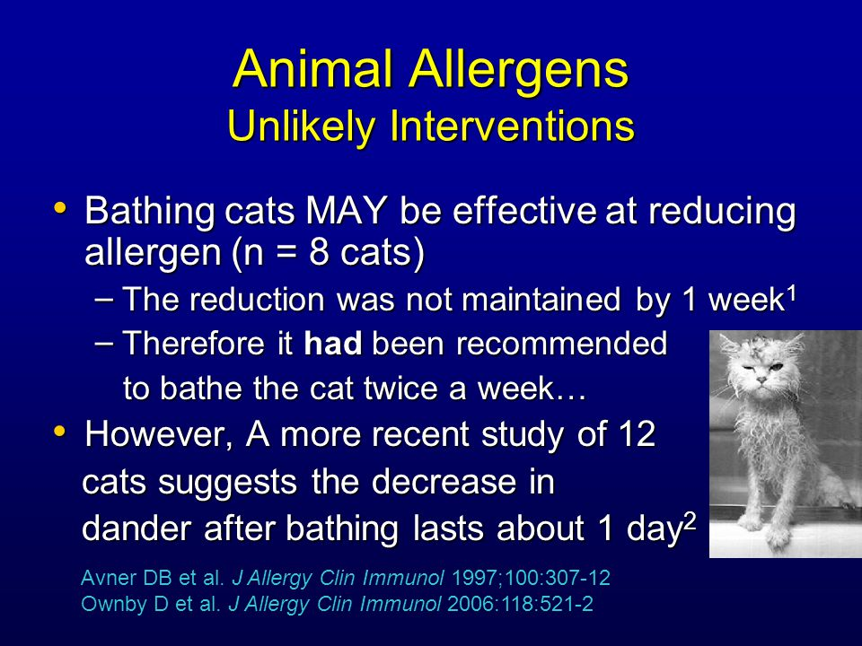 Animal Allergens Unlikely Interventions Bathing cats MAY be effective at reducing allergen (n = 8 cats) Bathing cats MAY be effective at reducing allergen (n = 8 cats) – The reduction was not maintained by 1 week 1 – Therefore it had been recommended to bathe the cat twice a week… to bathe the cat twice a week… However, A more recent study of 12 However, A more recent study of 12 cats suggests the decrease in cats suggests the decrease in dander after bathing lasts about 1 day 2 dander after bathing lasts about 1 day 2 Avner DB et al.