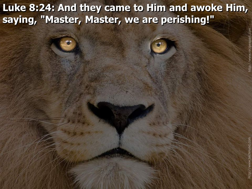 Luke 8:24: And they came to Him and awoke Him, saying,