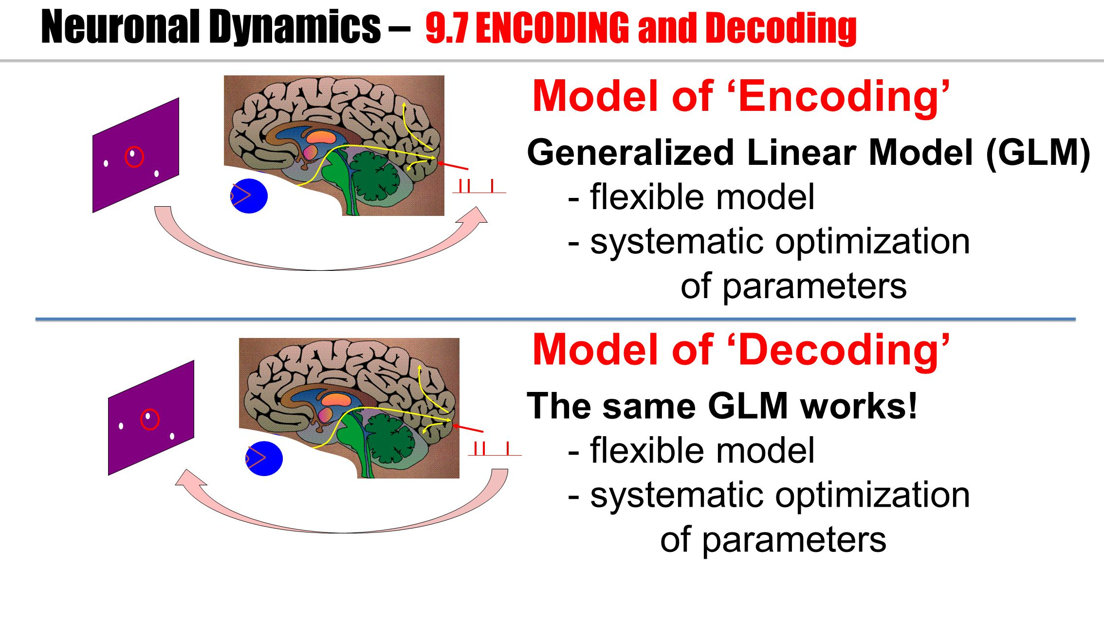 Model of 'Encoding' Neuronal Dynamics – 9.7 ENCODING and Decoding Generalized Linear Model (GLM) - flexible model - systematic optimization of parameters Model of 'Decoding' The same GLM works.