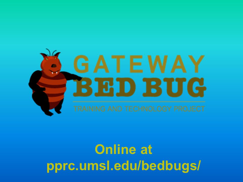 BED BUGS  HOW MANY OF YOU HAVE SEEN A LIVE BED BUG.