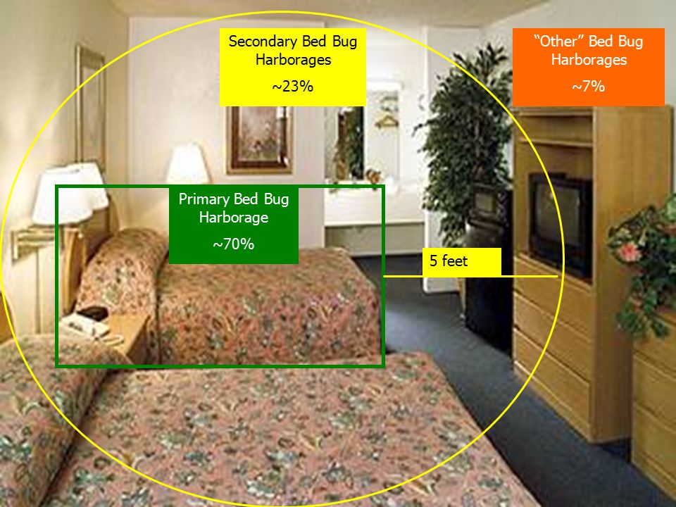 Primary Bed Bug Harborage ~70% 5 feet Secondary Bed Bug Harborages ~23% Other Bed Bug Harborages ~7%