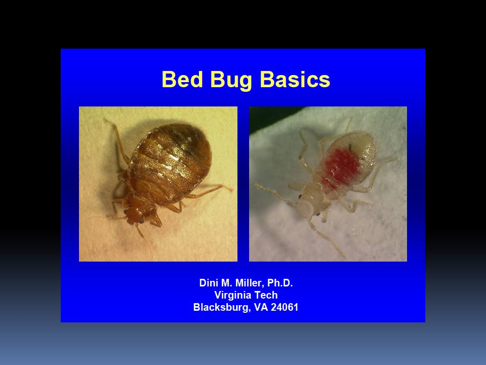 Now What…  Bedbug Policy Task Force  Policy Change  Reducing risk factors  Curbside bedding/furniture pick-up  Addressing areas of concern  Used furniture and clothing operations  Increase funding to treat/support treatment  Public Education  Increase access to educational materials  Reduce stigma