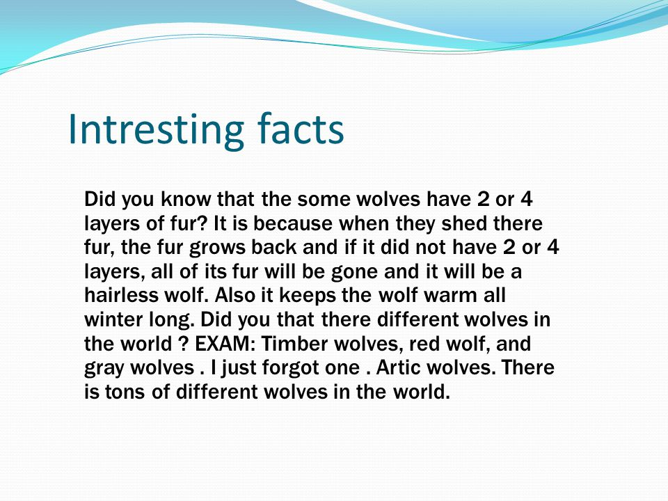 Intresting facts Did you know that the some wolves have 2 or 4 layers of fur? It is because when they shed there fur, the fur grows back and if it did