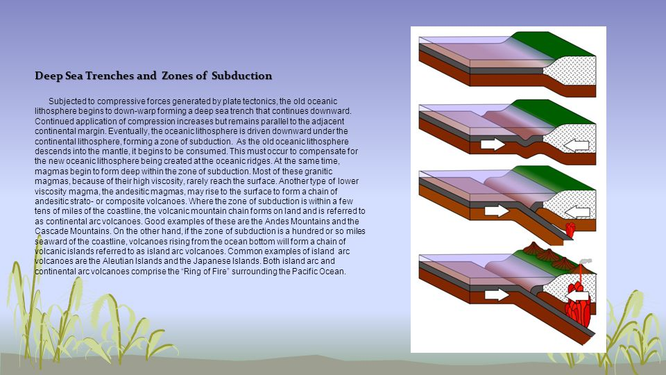 Deep Sea Trenches and Zones of Subduction Subjected to compressive forces generated by plate tectonics, the old oceanic lithosphere begins to down-war