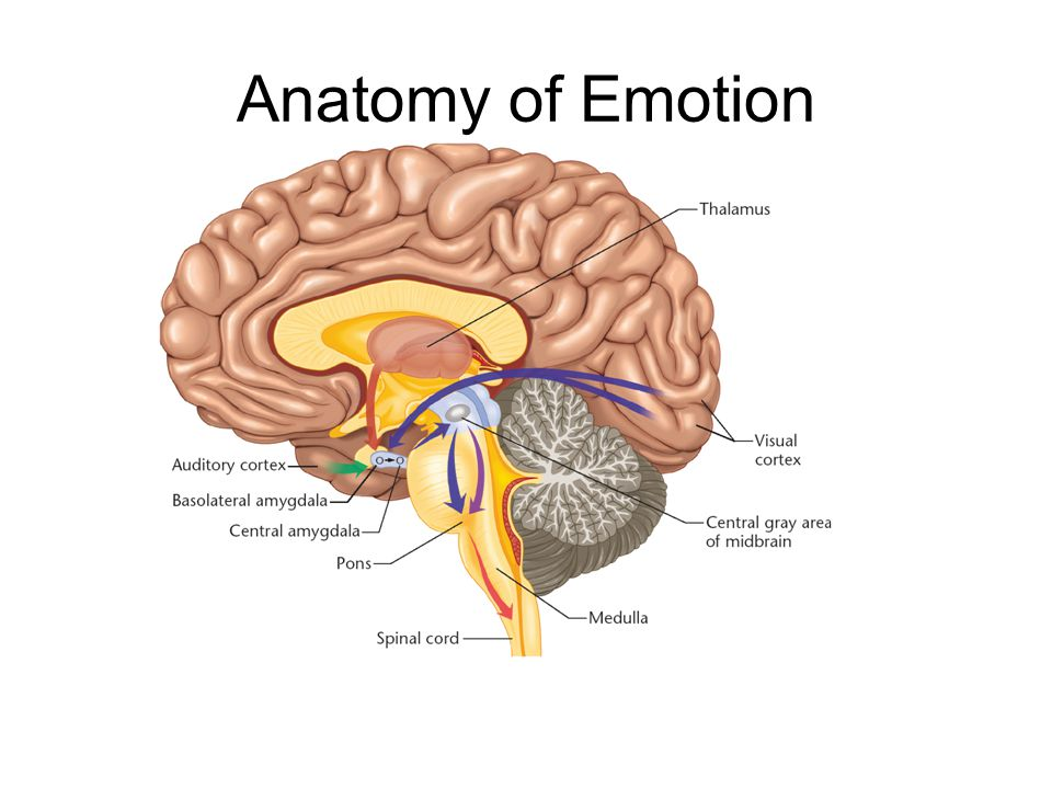 Anatomy of Emotion