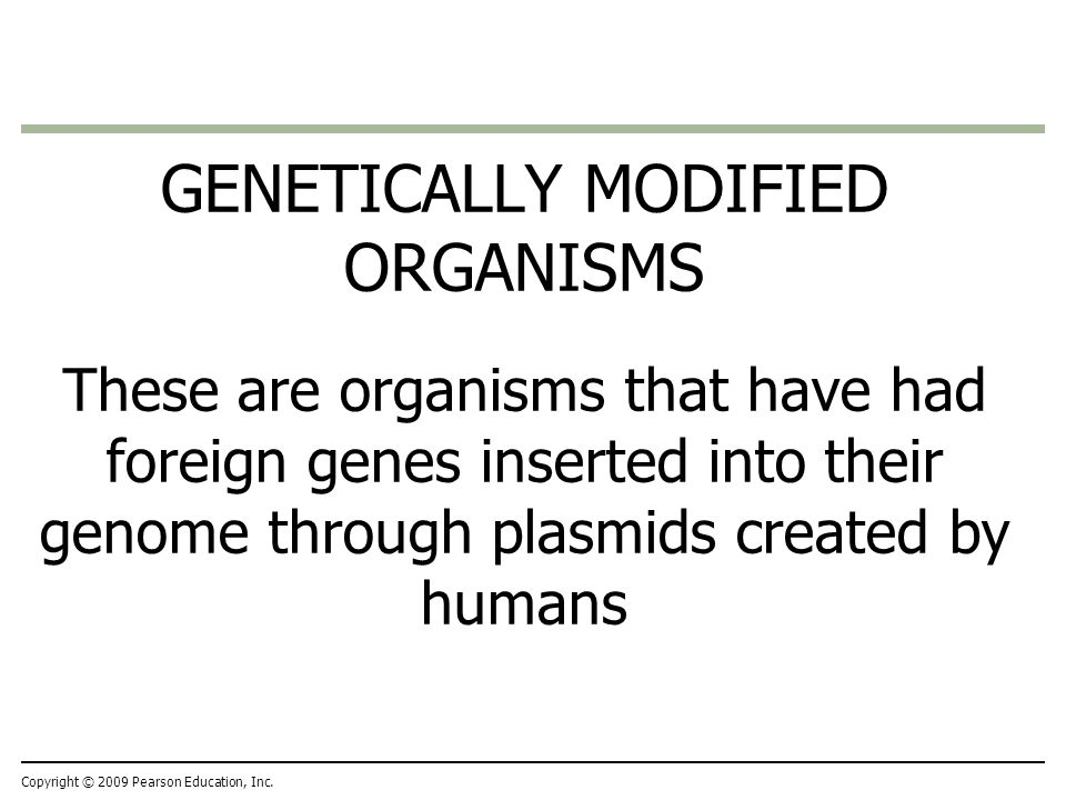 GENETICALLY MODIFIED ORGANISMS These are organisms that have had foreign genes inserted into their genome through plasmids created by humans Copyright © 2009 Pearson Education, Inc.