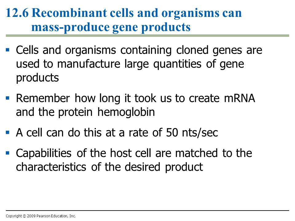 12.6 Recombinant cells and organisms can mass-produce gene products  Cells and organisms containing cloned genes are used to manufacture large quantities of gene products  Remember how long it took us to create mRNA and the protein hemoglobin  A cell can do this at a rate of 50 nts/sec  Capabilities of the host cell are matched to the characteristics of the desired product Copyright © 2009 Pearson Education, Inc.