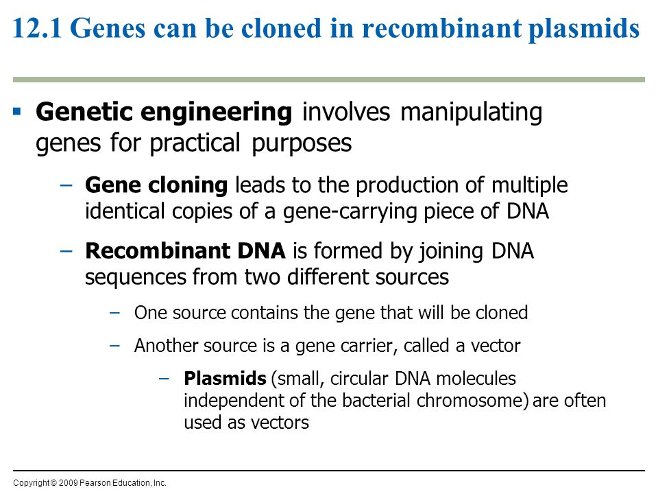 12.1 Genes can be cloned in recombinant plasmids  Genetic engineering involves manipulating genes for practical purposes –Gene cloning leads to the production of multiple identical copies of a gene-carrying piece of DNA –Recombinant DNA is formed by joining DNA sequences from two different sources –One source contains the gene that will be cloned –Another source is a gene carrier, called a vector –Plasmids (small, circular DNA molecules independent of the bacterial chromosome) are often used as vectors Copyright © 2009 Pearson Education, Inc.