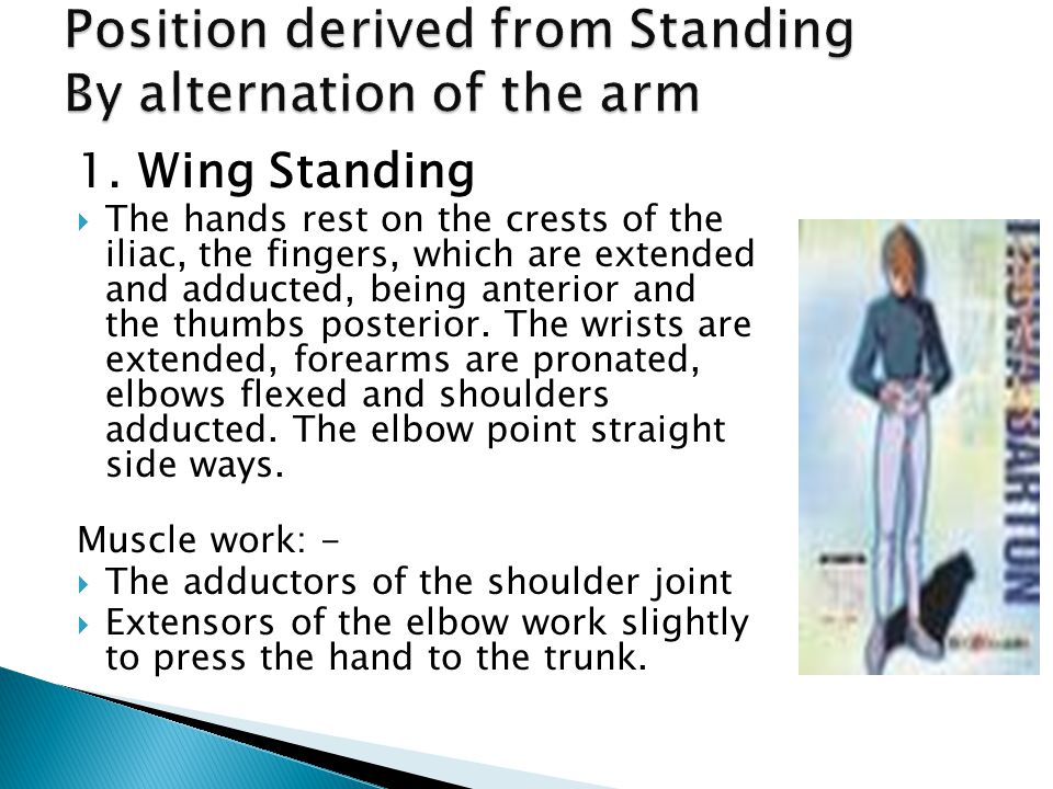 1. Wing Standing  The hands rest on the crests of the iliac, the fingers, which are extended and adducted, being anterior and the thumbs posterior. T