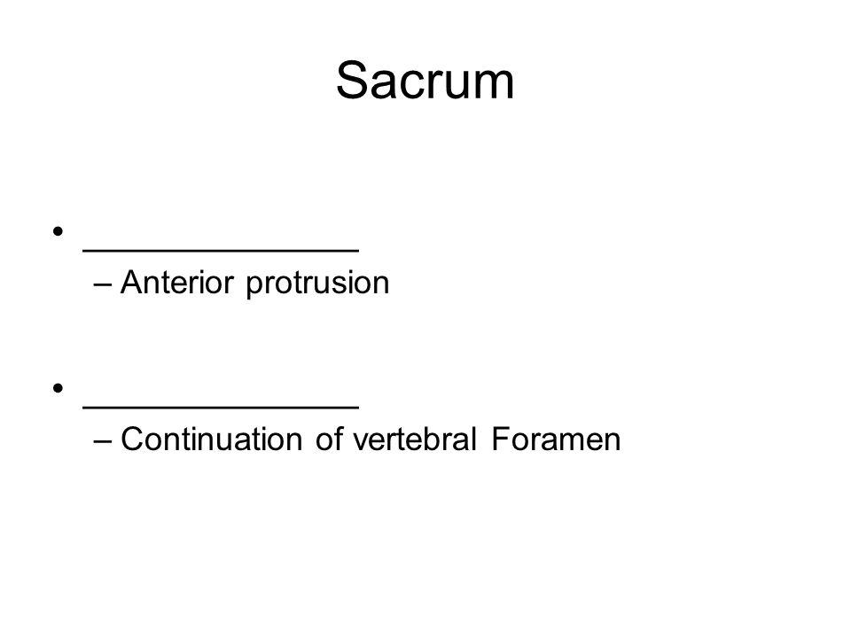 Sacrum _____________ –Anterior protrusion _____________ –Continuation of vertebral Foramen