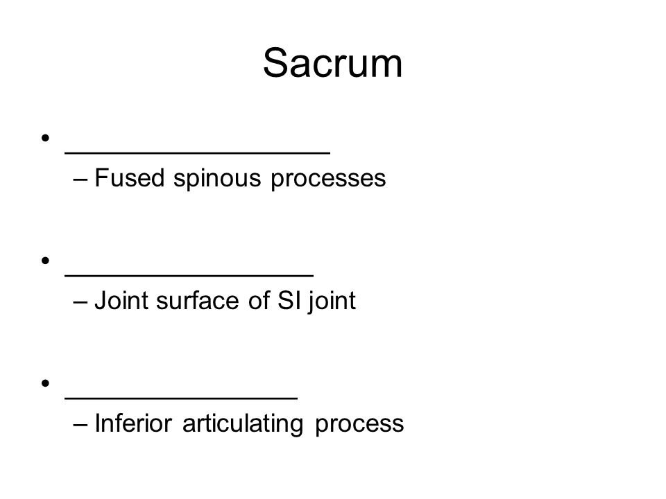 Sacrum ________________ –Fused spinous processes _______________ –Joint surface of SI joint ______________ –Inferior articulating process