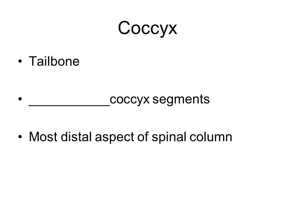 Coccyx Tailbone ___________coccyx segments Most distal aspect of spinal column