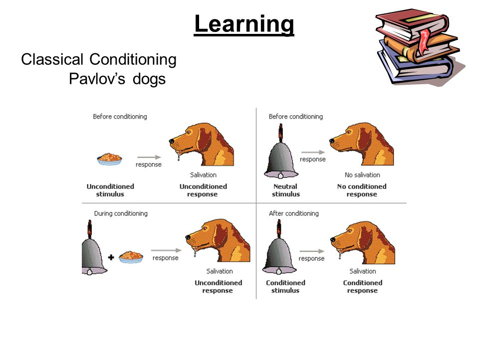 Learning Classical Conditioning Pavlov's dogs