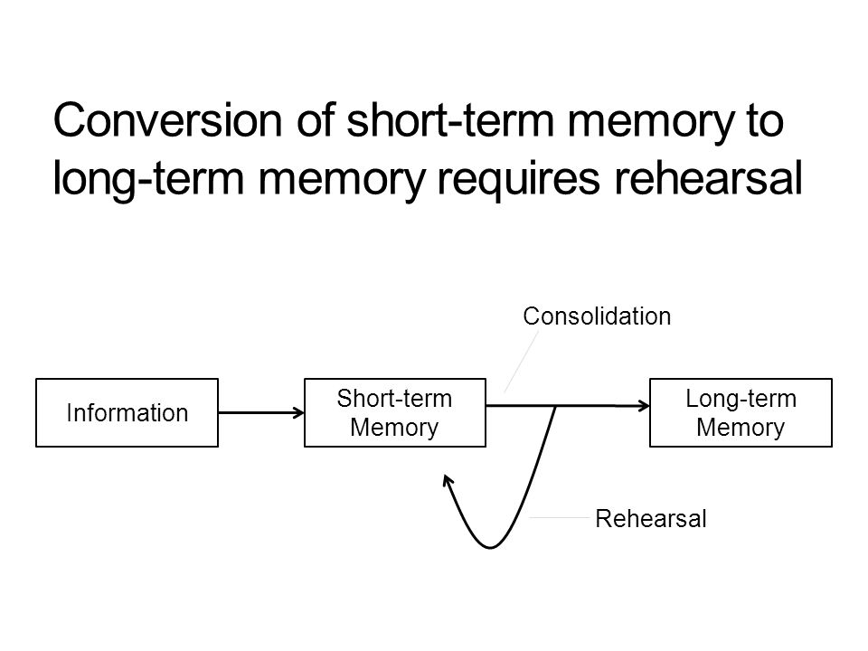 Conversion of short-term memory to long-term memory requires rehearsal Information Short-term Memory Long-term Memory Consolidation Rehearsal