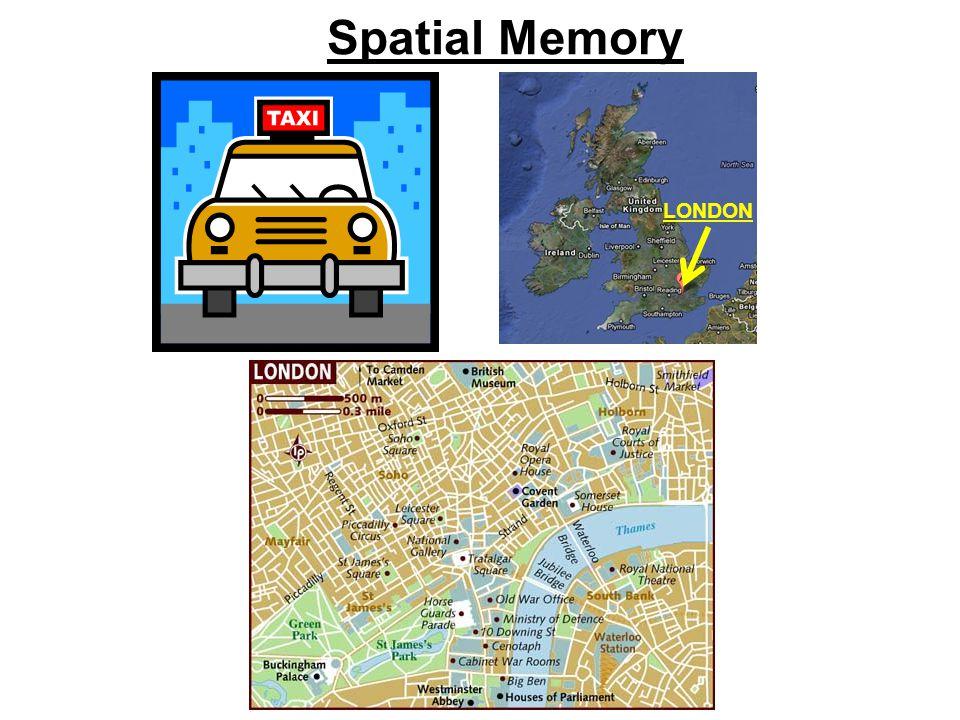 Spatial Memory LONDON