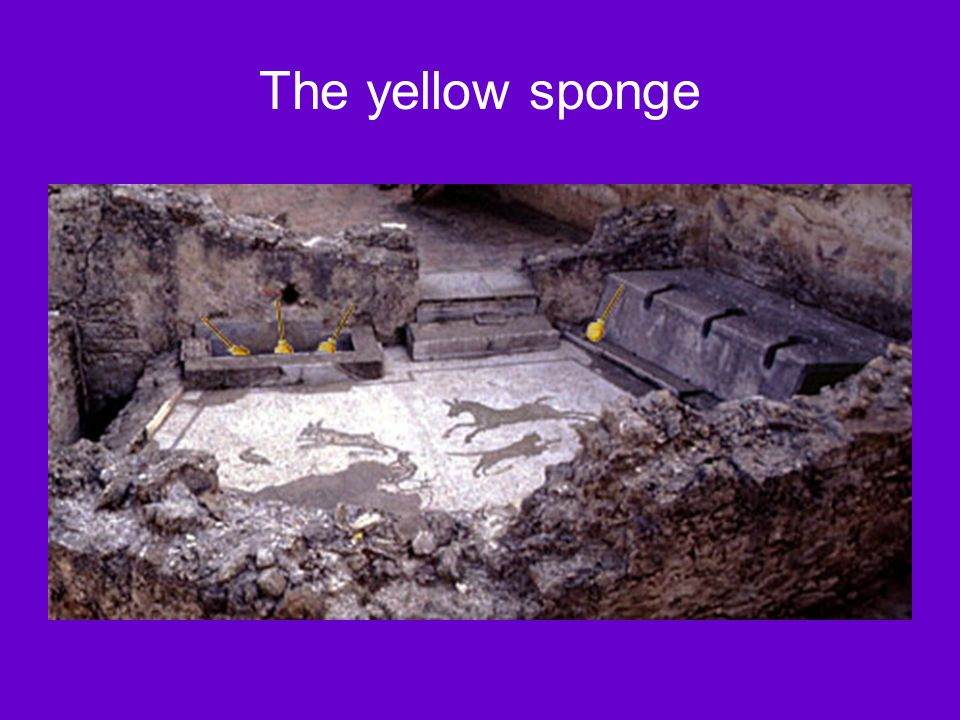 The yellow sponge