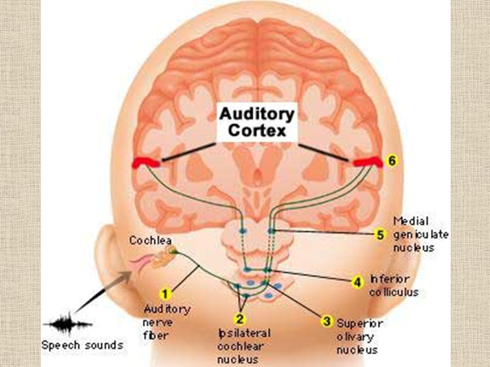 Promote Tinnitus Habituation Acoustic stimulation (sound therapy): broadband noise (TRT), adjusted tonal sounds (Neuromoics) Patient education and counseling Long term follow ups Time Management of other contributing factors: sleep, anxiety, depression, stress, etc.