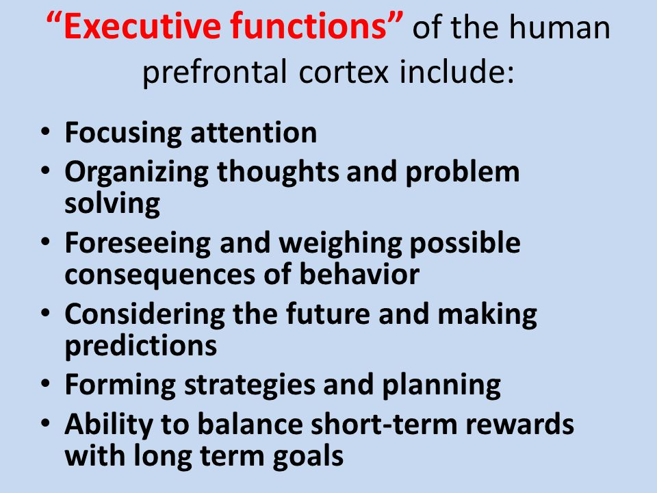 """""""Executive functions"""" of the human prefrontal cortex include: Focusing attention Organizing thoughts and problem solving Foreseeing and weighing possi"""