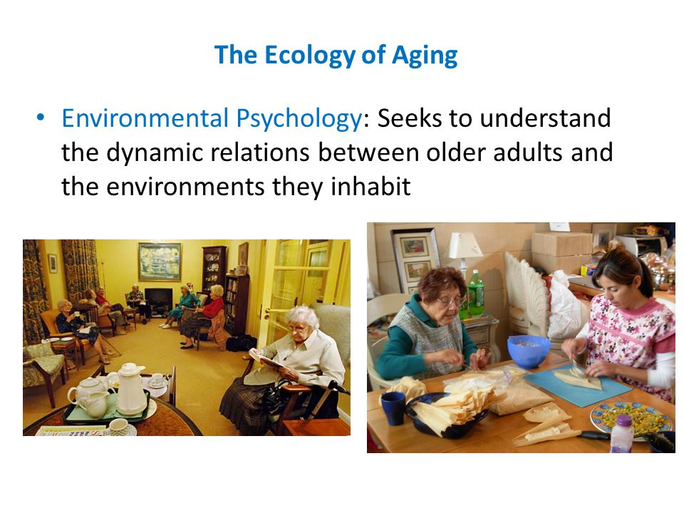 The Ecology of Aging Environmental Psychology: Seeks to understand the dynamic relations between older adults and the environments they inhabit