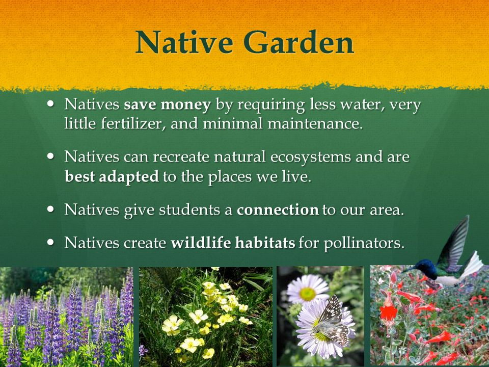 Native Garden Natives save money by requiring less water, very little fertilizer, and minimal maintenance.
