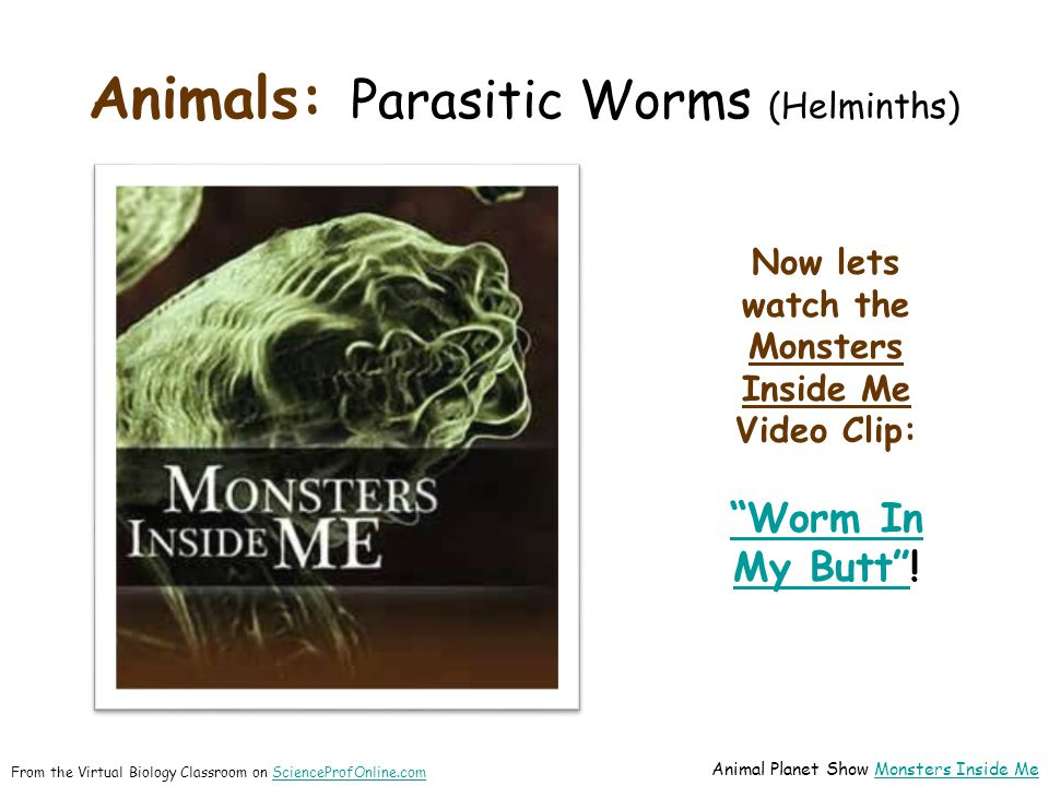 "Animals: Parasitic Worms (Helminths) Now lets watch the Monsters Inside Me Video Clip: ""Worm In My Butt""""Worm In My Butt""! From the Virtual Biology Cl"