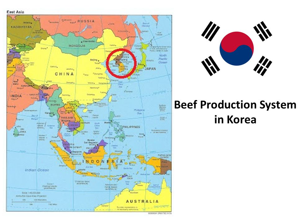 Beef Production System in Korea