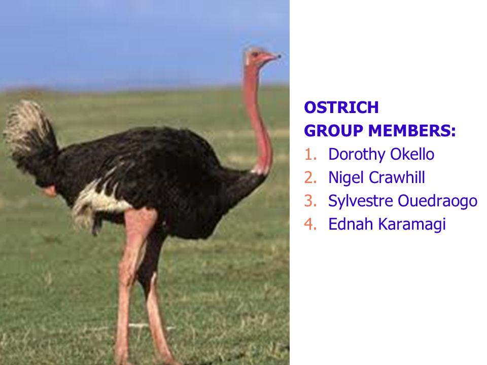 OSTRICH GROUP MEMBERS: 1.Dorothy Okello 2.Nigel Crawhill 3.Sylvestre Ouedraogo 4.Ednah Karamagi