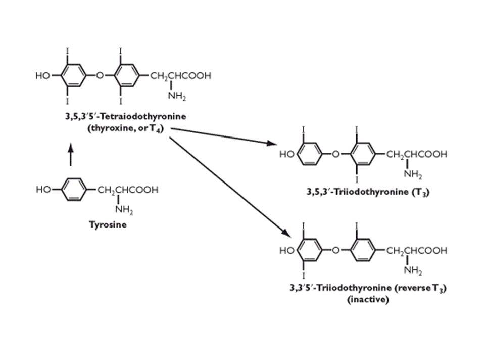 Action of thyroid hormones Increase basal metabolic rate Increase activity of Na/K ATPase Required for normal bone and brain development Increase rate of carbohydrate and fat metabolism Increase cardiac output and heart rate The effect of thyroid hormones on the mitochondria is under investigation Signalling by binding of T3 to nuclear hormone receptors in target tissues to activate transcription of many genes