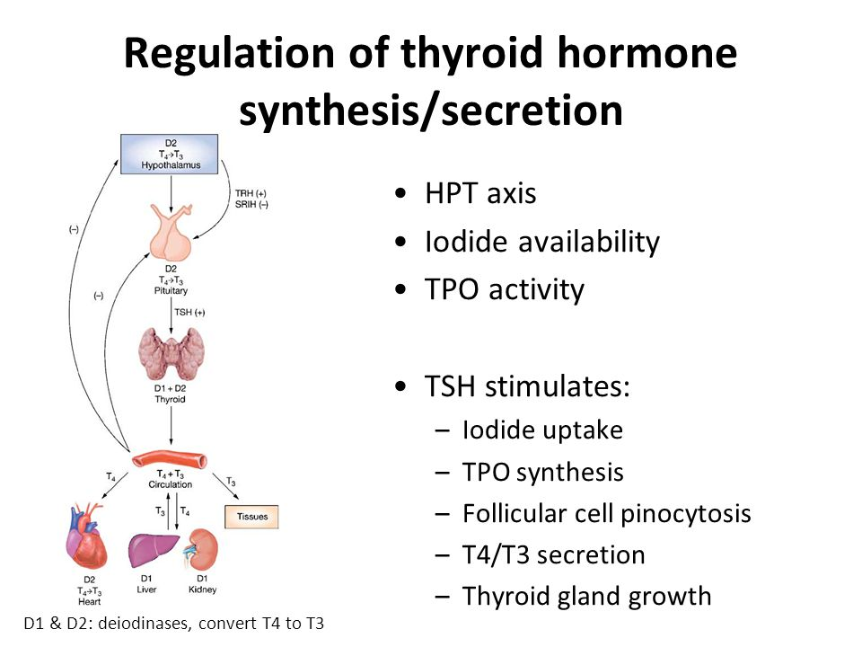 Anti-thyroid drugs Carbimazole –Most widely used in UK –Inhibits TPO, therefore  T3 & T4 synthesis Propylthiouracil –Drug of choice in pregnancy as protein-bound so crosses placenta/milk ducts to lesser degree –Inhibits TPO and also peripheral conversion of T4  T3