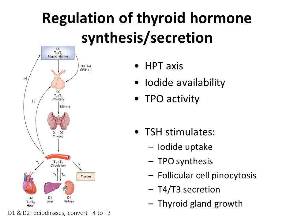 Thyroid function tests TSH 0.35 – 4.94 mU/L Free T4 9.0 – 20.0 pmol/L (Abbott) Free T3 Others: Thyroid peroxidase Ab (general marker of thyroid autoimmunity) TSH receptor Ab (autonomously stimulates TSH-R in Graves' disease) Thyroglobulin (specifically expressed in thyroid tissue ∴ used to monitor thyroid Ca after ablation)