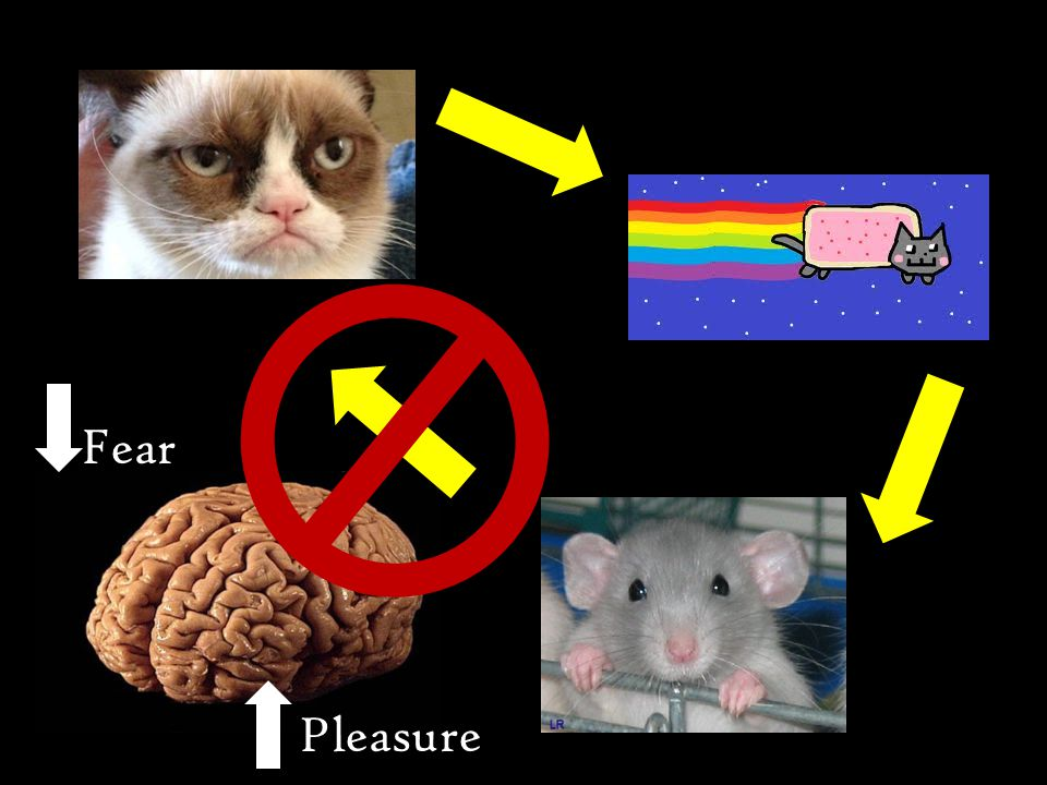Fear Pleasure