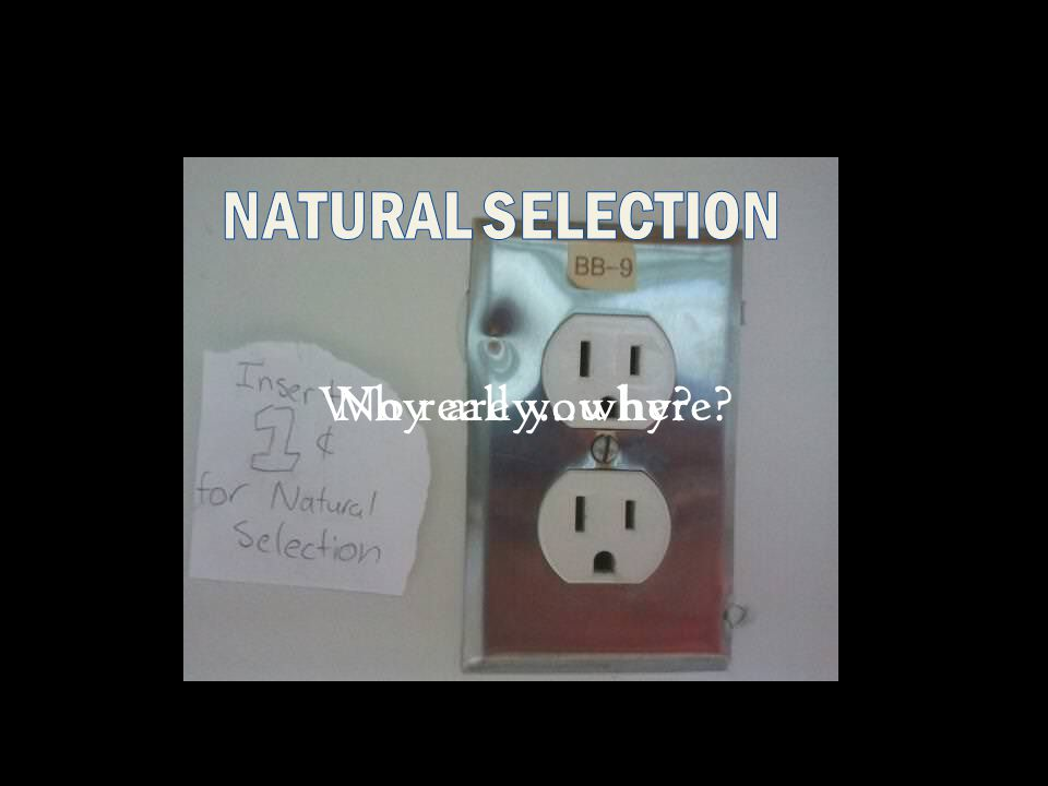 Why are you here No really…why