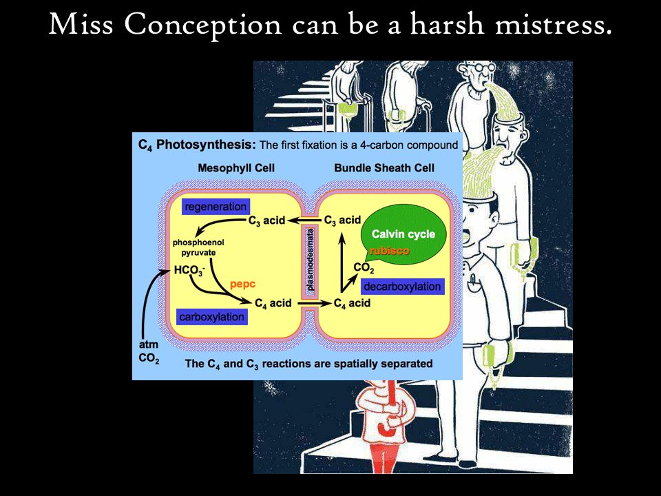 Miss Conception can be a harsh mistress.