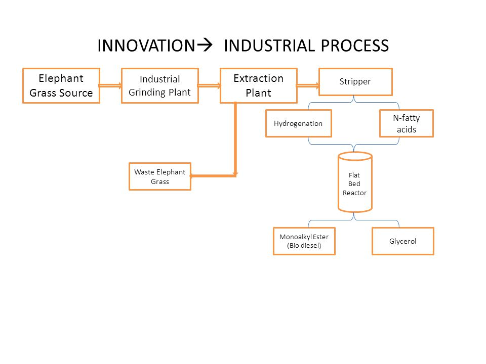 INNOVATION  INDUSTRIAL PROCESS Elephant Grass Source Industrial Grinding Plant Stripper Extraction Plant Flat Bed Reactor N-fatty acids Waste Elephant Grass Hydrogenation Glycerol Monoalkyl Ester (Bio diesel)