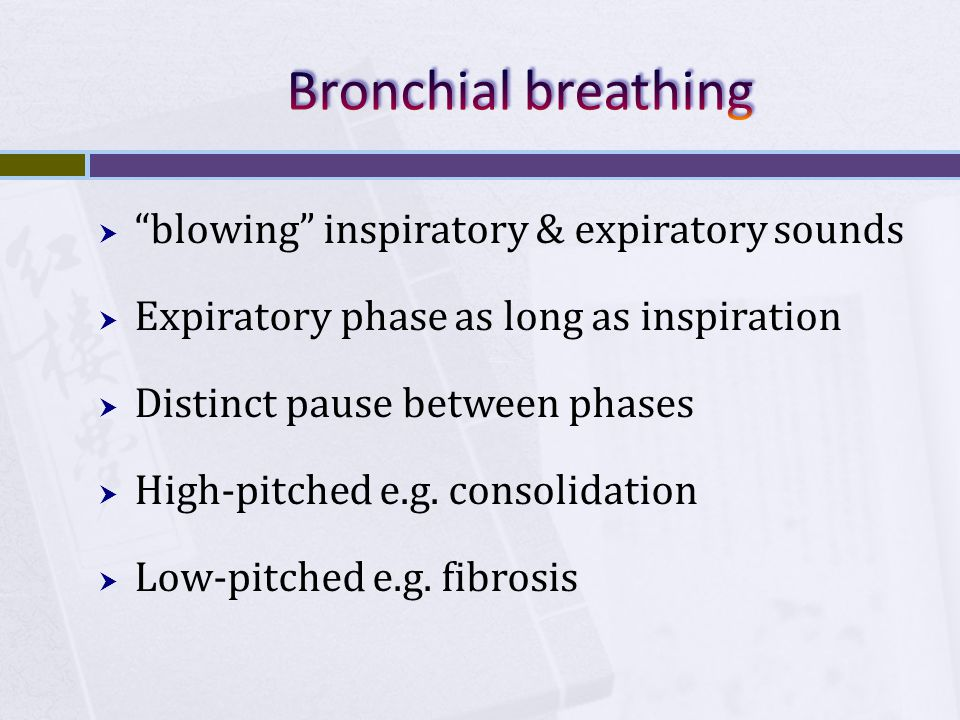 """ """"blowing"""" inspiratory & expiratory sounds  Expiratory phase as long as inspiration  Distinct pause between phases  High-pitched e.g. consolidatio"""