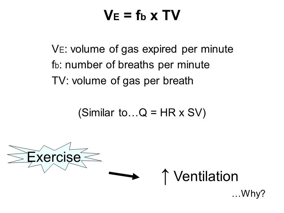 V E = f b x TV V E : volume of gas expired per minute f b : number of breaths per minute TV: volume of gas per breath (Similar to…Q = HR x SV) ↑ Ventilation …Why.