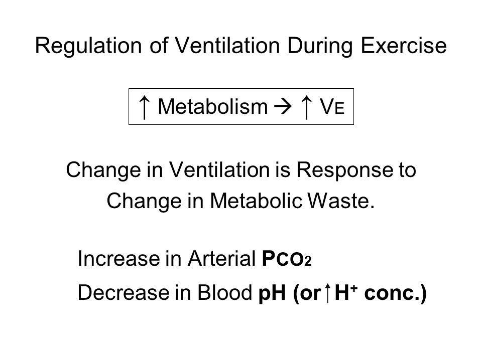 Regulation of Ventilation During Exercise ↑ Metabolism  ↑ V E Change in Ventilation is Response to Change in Metabolic Waste.