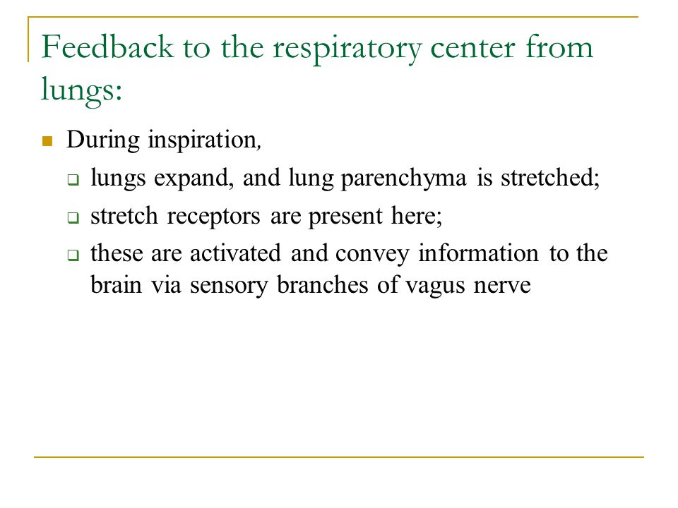 Feedback to the respiratory center from lungs: During inspiration,  lungs expand, and lung parenchyma is stretched;  stretch receptors are present h