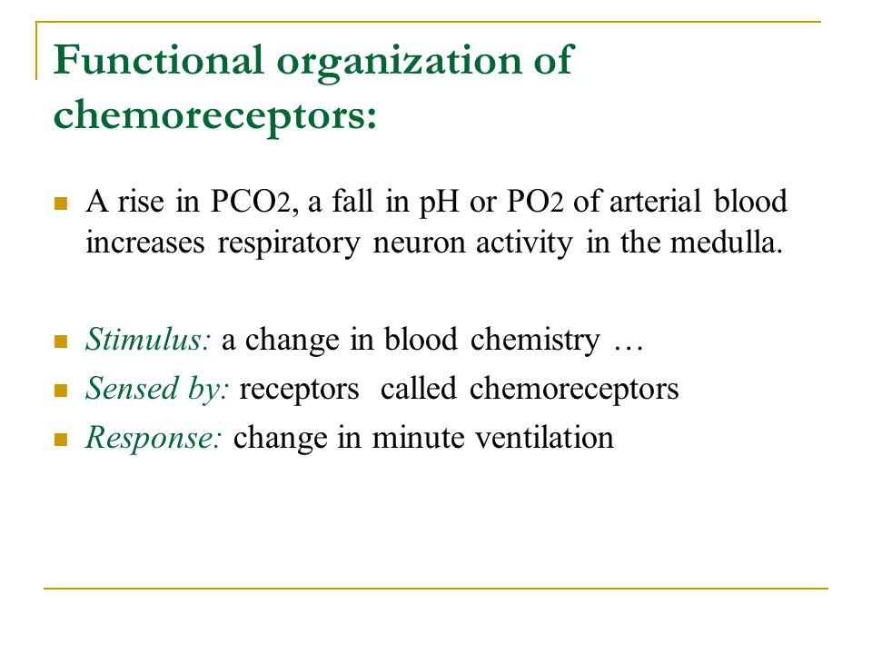 Functional organization of chemoreceptors: A rise in PCO 2, a fall in pH or PO 2 of arterial blood increases respiratory neuron activity in the medull